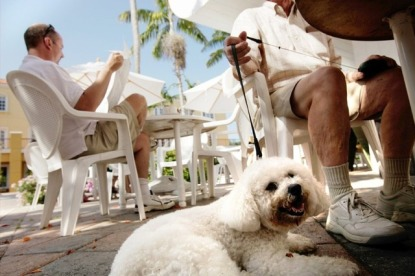Naples resident David Miller sits with his Bichon Frise named Perki outside the Fifth Avenue Coffee Company while having coffee with friends on Tuesday, June 1, 2010 in Naples. On Wednesday, the Naples City Council will consider creating an ordinance to allow dogs in outdoor dining areas of restaurants across the city. David Albers/Staff