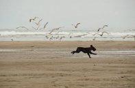 dog-on-beach-670