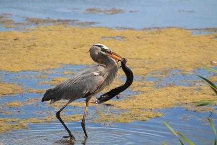 orlando_wetlands_photo_by_ashley_belanger_3