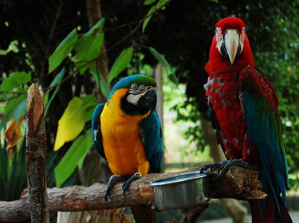 Two_macaws_-Gulf_Breeze_Zoo,_Gulf_Breeze,_Florida,_USA-8a.jpg